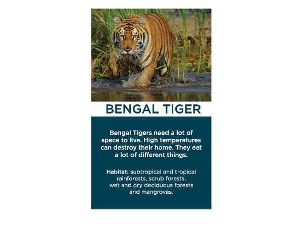 Bengal Tiger Card, Back